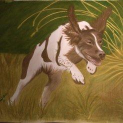 Jaktspanieln Tärna, akvarell