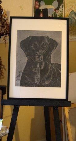 Porträtt av labrador, kol