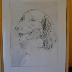 Ziggy Stardust, blyerts teckning, en av mina hundars pappa, tyckte han hade ett sånt uttryck i sitt ansikte som fångade mig, försökte skapa känslan av förväntan och iver.